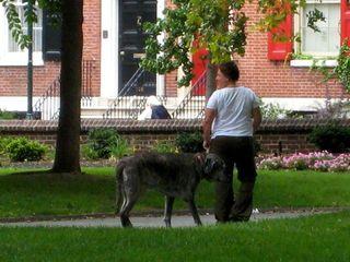 Big doggy3