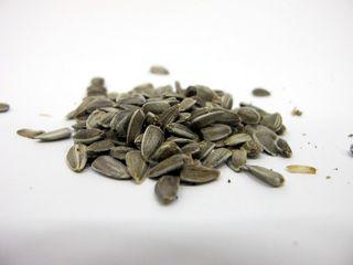 Sunflower Seed Harvesting (6)