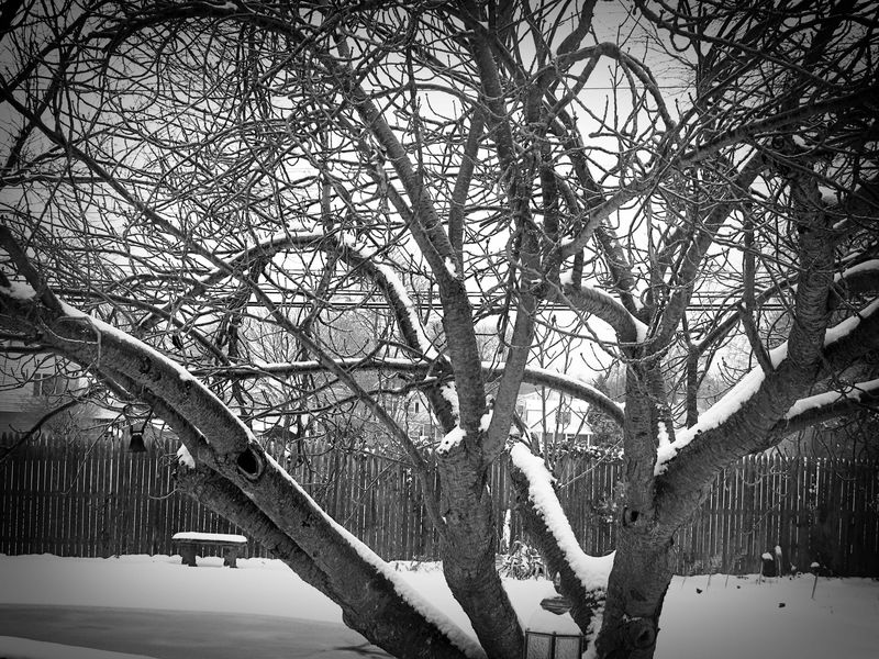 Snowy Weather_1