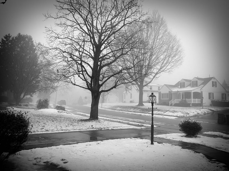 The Mist_1