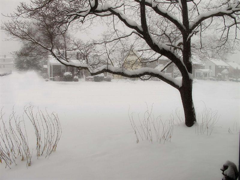 Tree winter snow